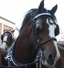 Blinkers (horse tack) - Wikipedia